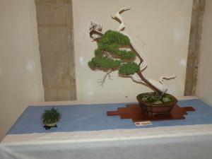 Arte bonsai in mostra al chiostro dei Carmelitani