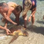 Tartaruga gigante liberata ai Giummari