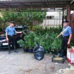 Rinvenuto laboratorio per la coltivazione di marijuana